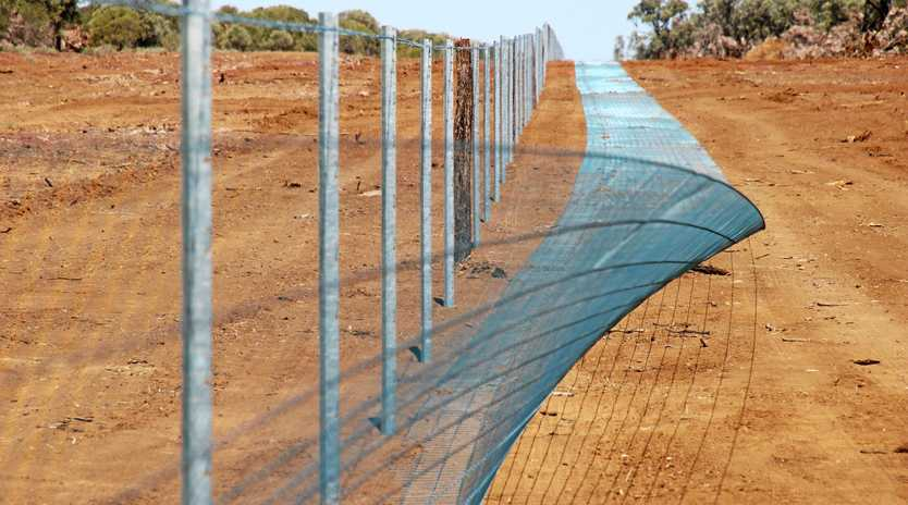 FENCING FUND: Balonne Shire Council has secured an $8 million fund for wild dog exclusion fencing.