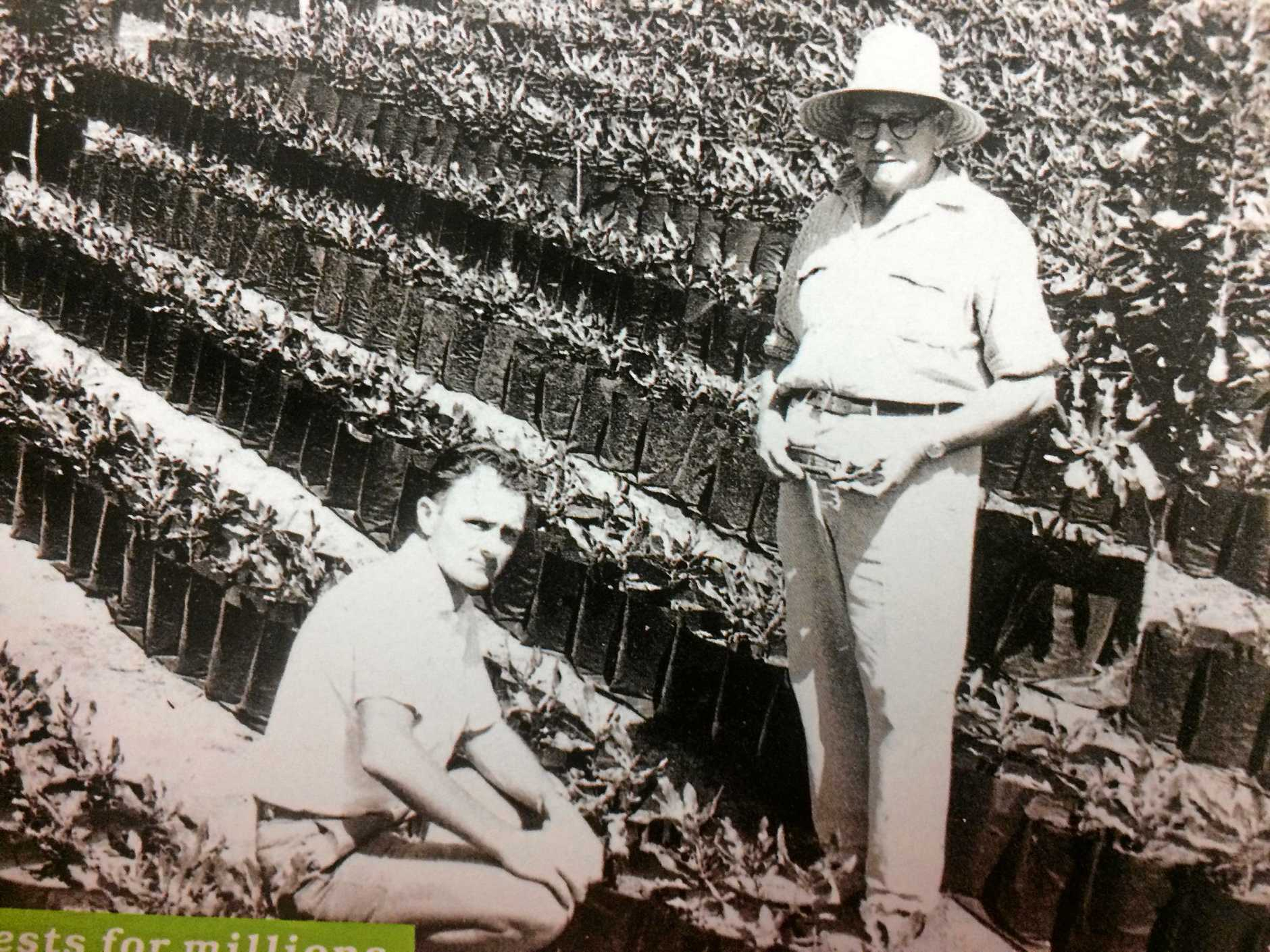 PIONEERS: Macadamia industry pioneers Stan Henry and Norm Greber on Mr Greber's experimental macadamia orchard at Amamoor.