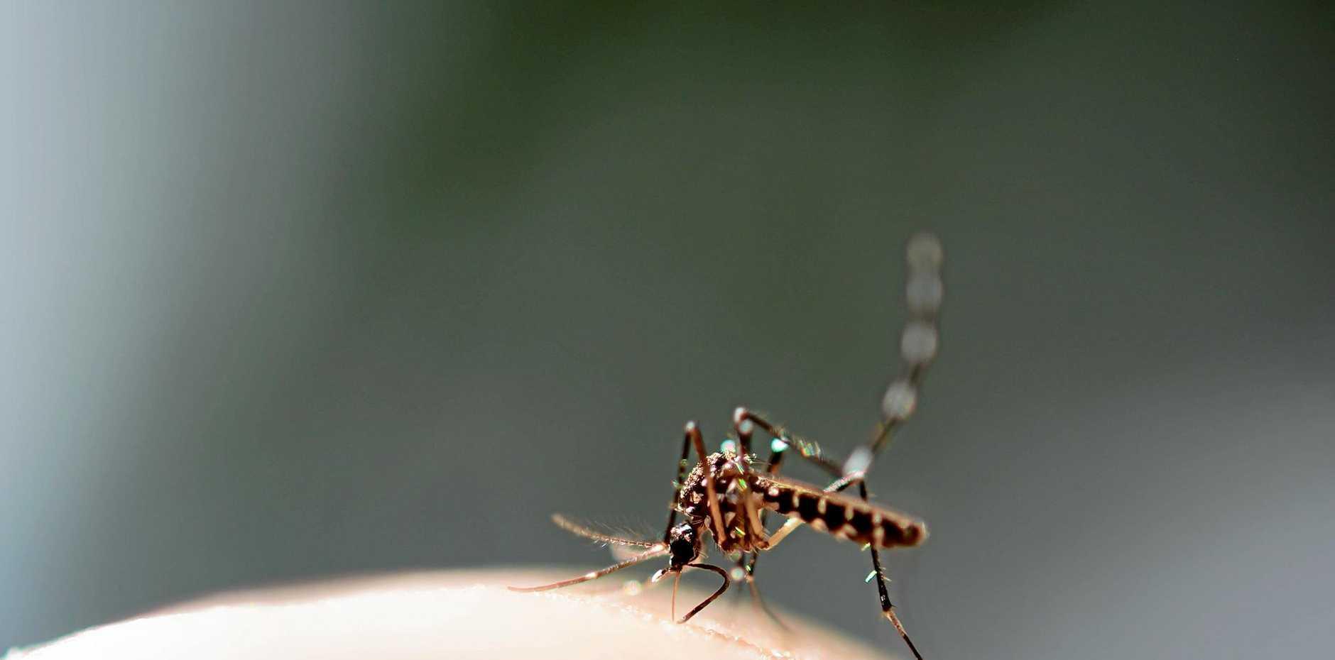 Dengue fever numbers in Rockhampton have been confirmed.