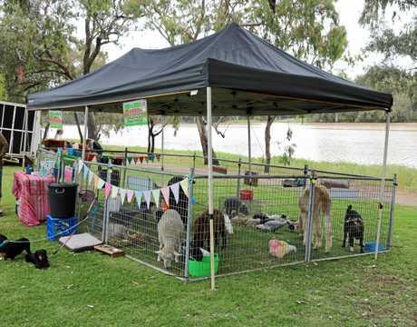Animal 2U petting farm.