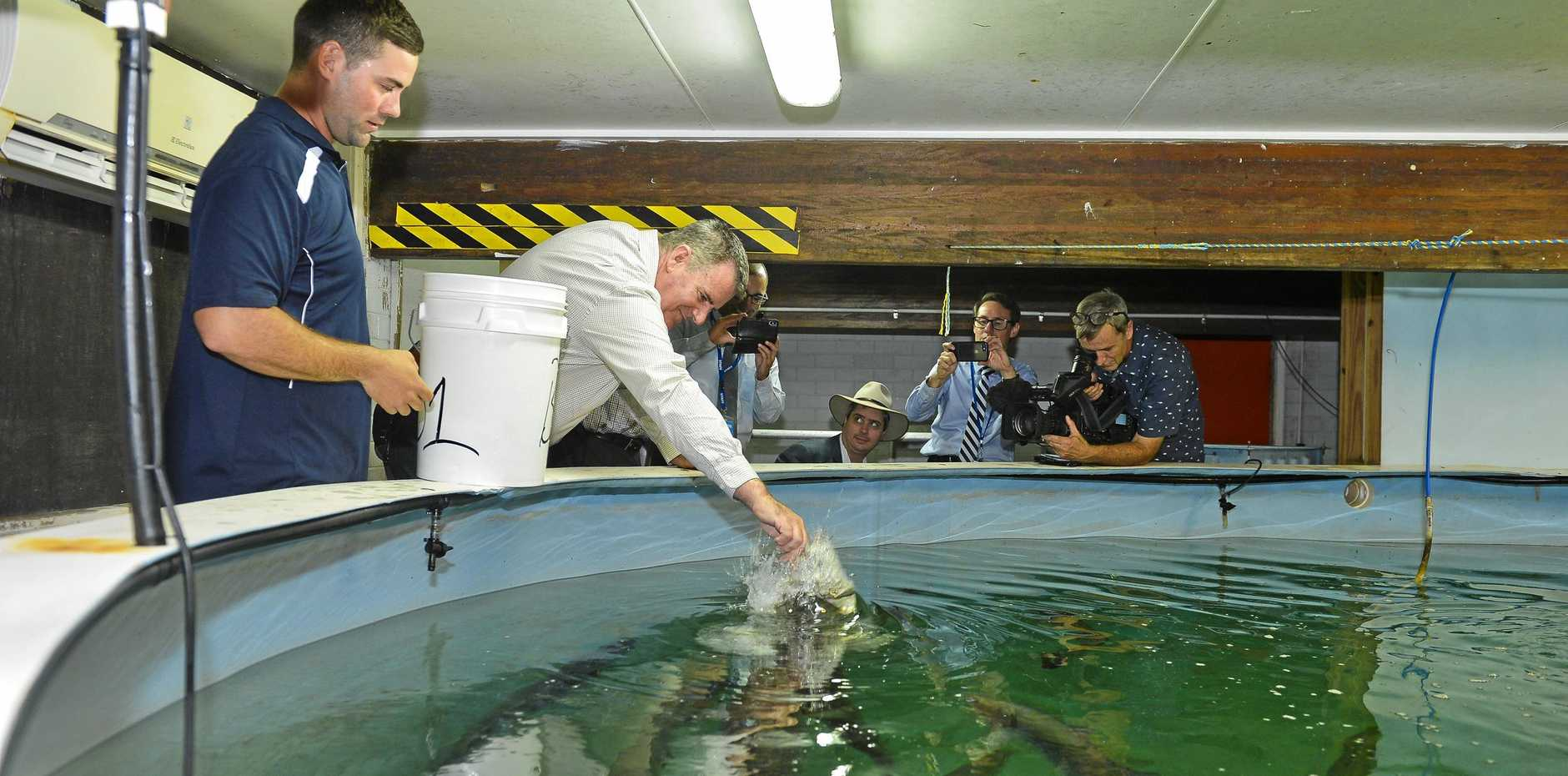 ON THE MOVE: Fisheries Minister Mark Furner tours the current barramundi hatchery in Gladstone last year.