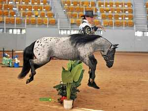 Show goes on for these horses this weekend