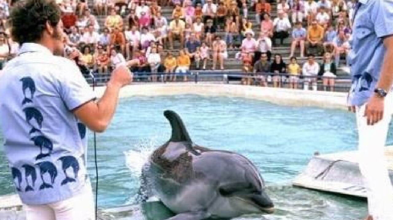 The new bill will make whale and dolphin captivity punishable by fines up to $A215,000.