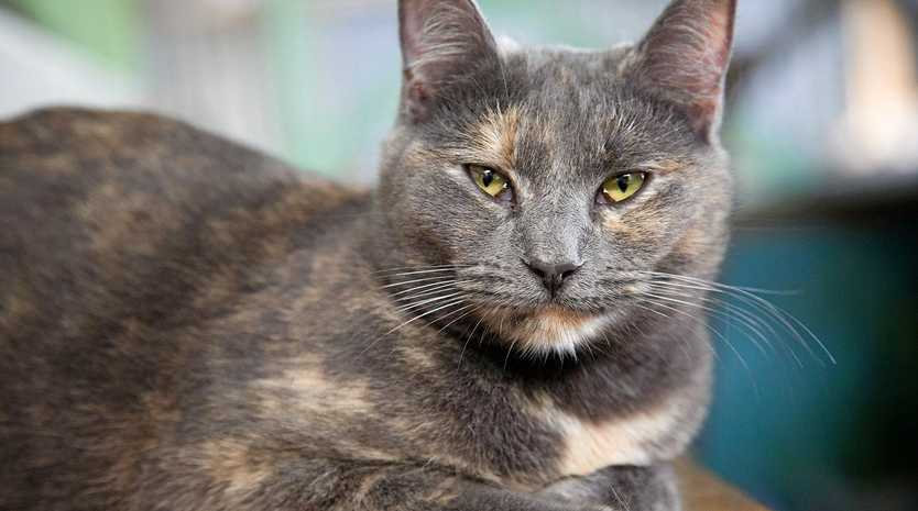 Cat registration will soon be mandatory in the Maranoa, after Council resolved to introduce a new program from July 1.