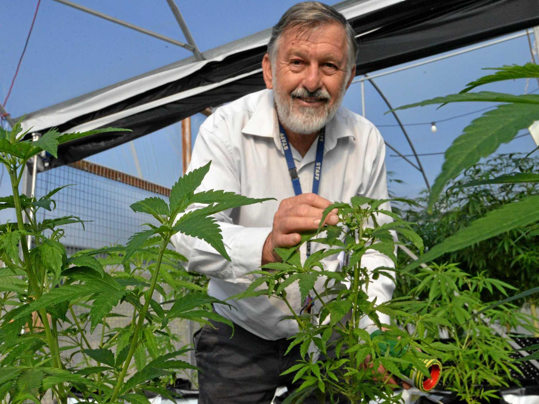 GREEN LIGHT: John Hall with medicinal cannabis plants.