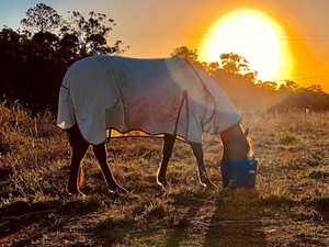 Family's heartbreak: RSPCA says horse suffering in pain