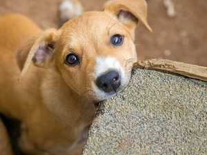 Dog owner alert: Outbreak of deadly parvovirus