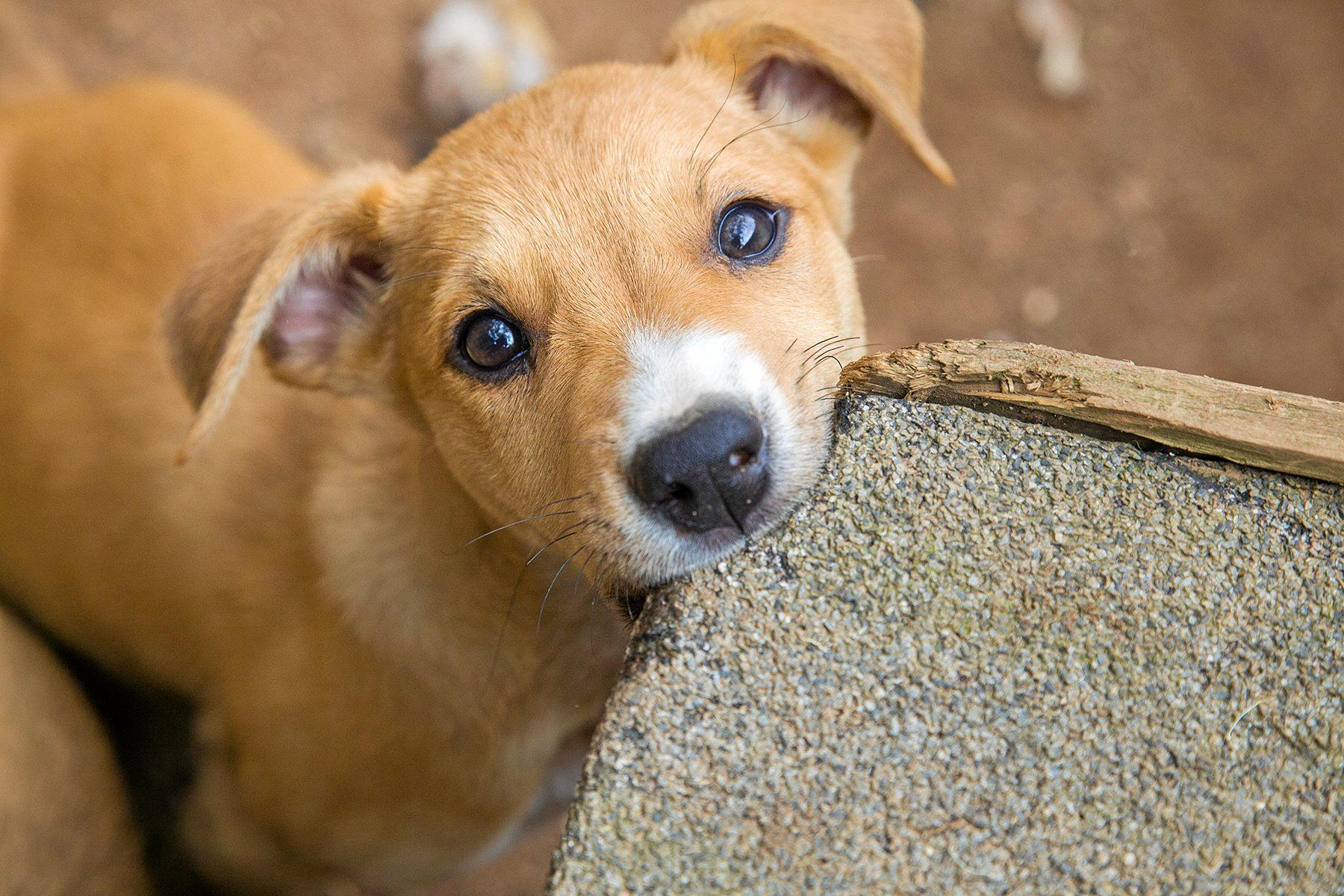 DEALY DO VIRUS ALERT: After a dog suffering from the Parvovirus, Byron Shire is urging all pet owners to ensure their best friend is inoculated against this too-often deadly disease.