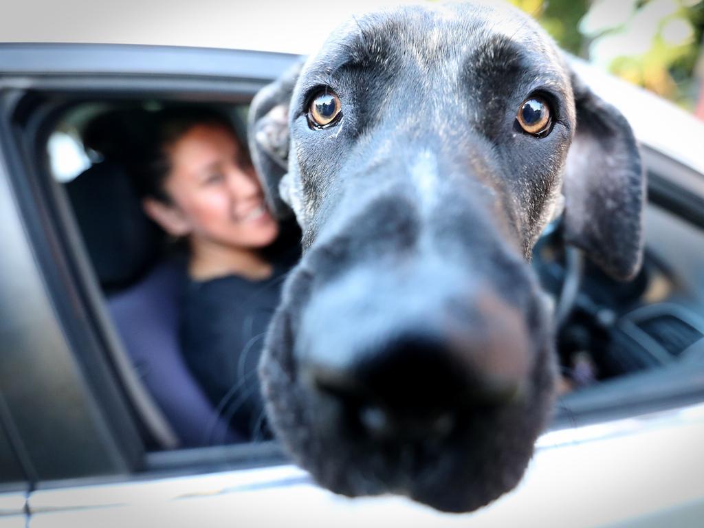 Myrrah Diamond and her dog Henry. Picture: Jamie Hanson