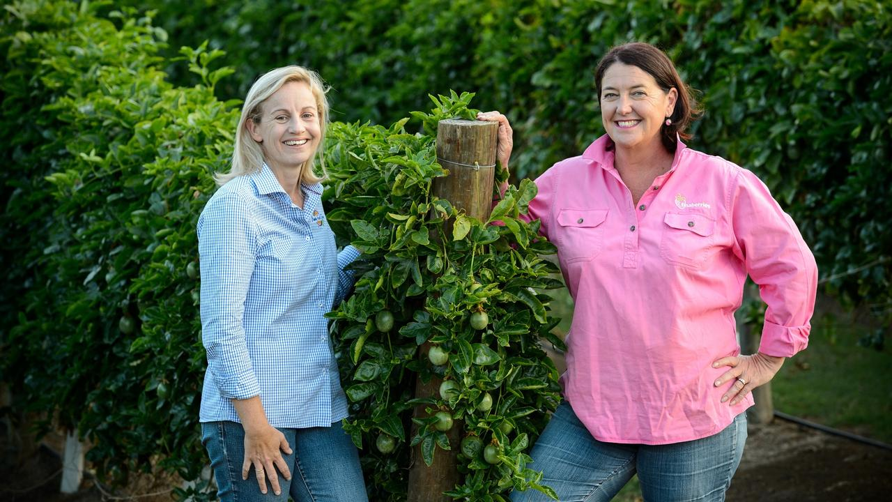 Suzie Clarke (left) of Bundy Food Tours with Tina McPherson of Tinaberries in Bundaberg. Picture: Paul Beutel