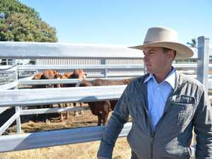 Beef and cattle at Mackay Show