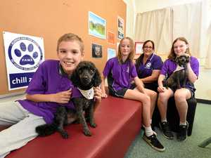 M'boro school pets the best therapy