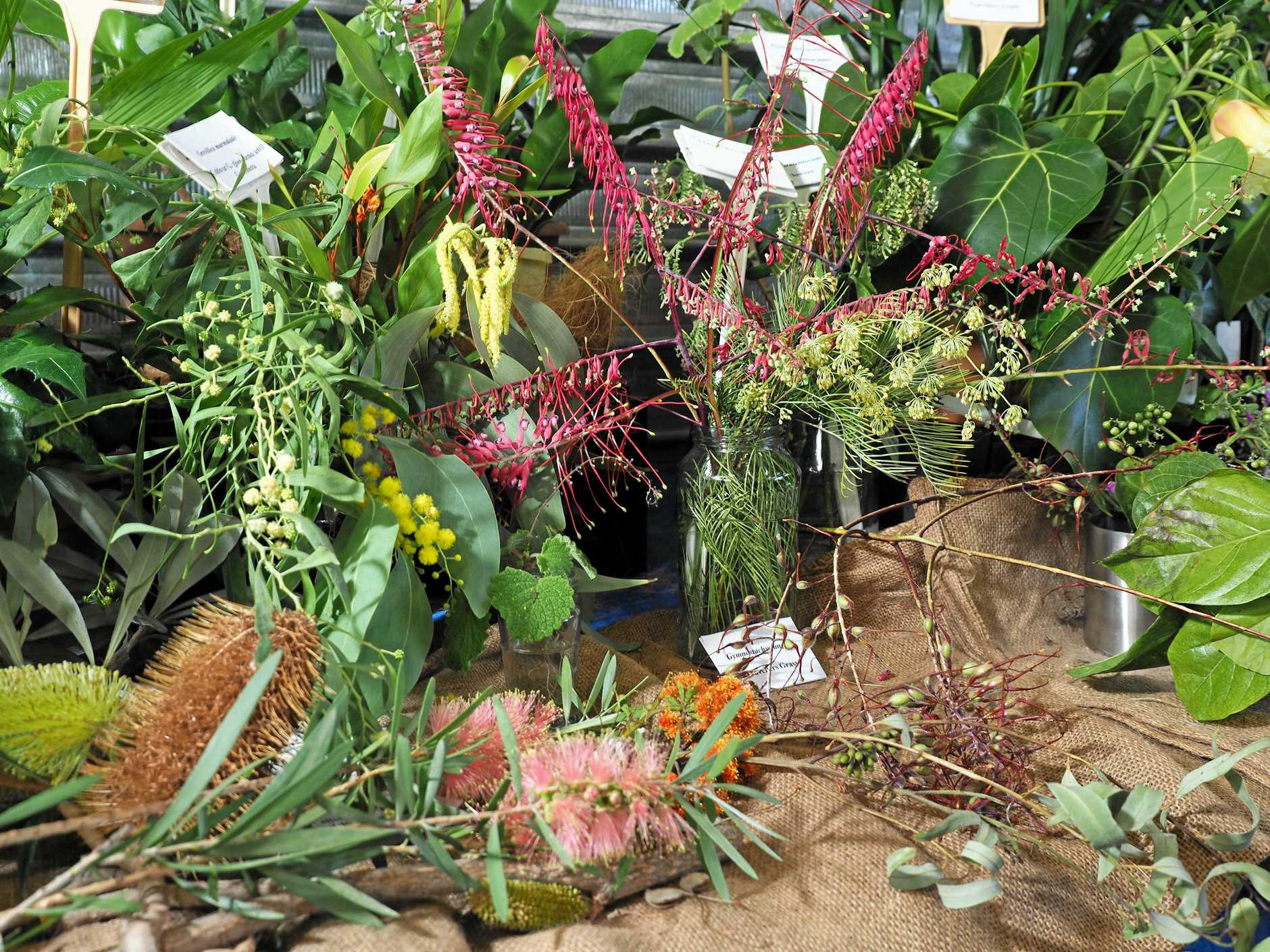 Native flowers at the Mackay Show 2019.