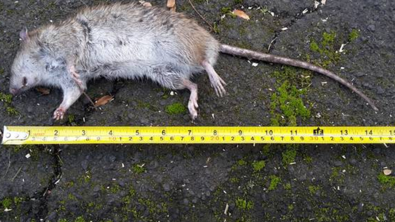 The man twice threw a dead rat with force into the victim's face.