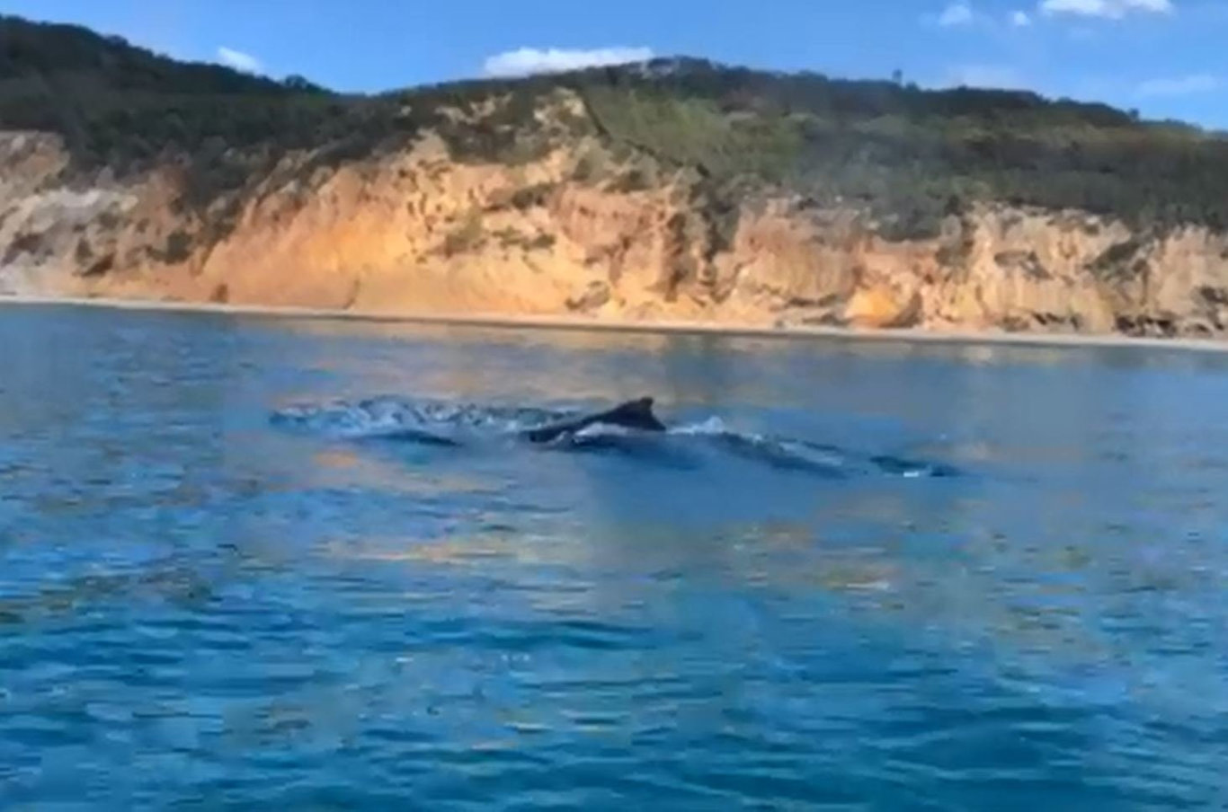 A whale swims away after being freed from shark nets at Rainbow Beach.