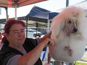 Dogs on show in Mackay