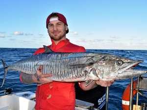 Gympie angler in fight of life against monster mackerel