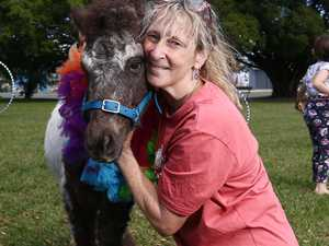 Circus school risks losing prized pony over red tape