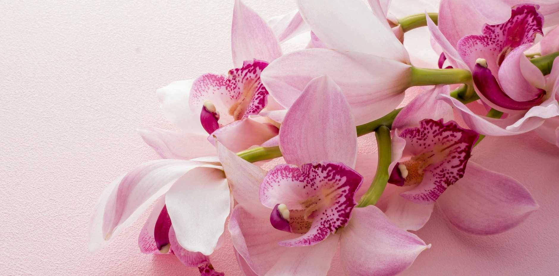 An established cymbidium orchid needs plenty of space to be displayed at its best.
