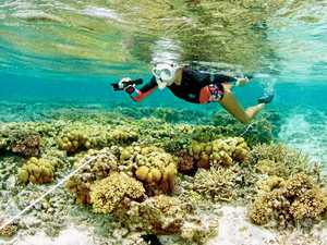 SCU scientist discovers remarkable coral reef recovery