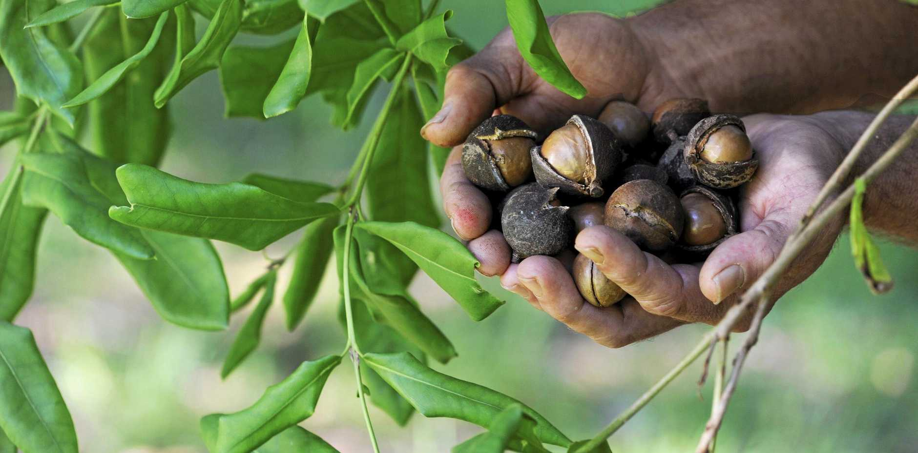 THE Gympie macadamia industry will gather tomorrow for an important industry 'MacGroup' event at a local orchard.