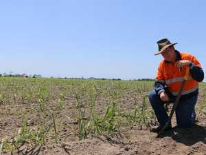 Sweet news for cane growers
