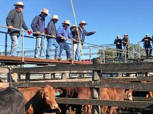WATCH: 'Very tough day' for Burnett cattle sales