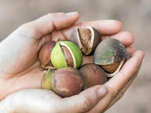 Macadamia farm fined, pesticide contractor cautioned