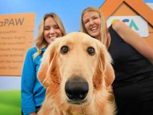 Much loved dog set to make race appearance