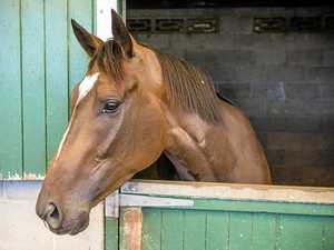 Police call for pony club gate theft info