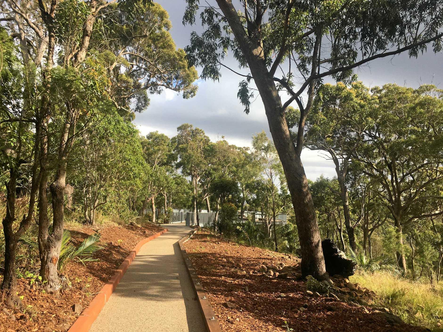 The tree foliage around Mt Archer's canopy walk.