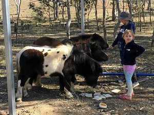 Mum devastated after lost pet ponies put up for sale