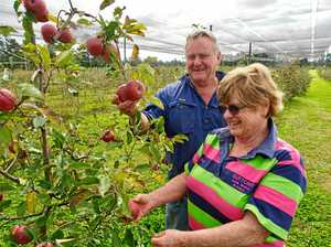 How Stanthorpe is leading the way in wine, tourism