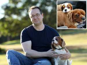 Man's $40K vet bill to save dog's life