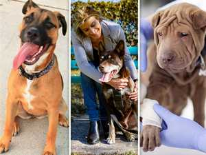 Revealed: Dog breeds that break the bank