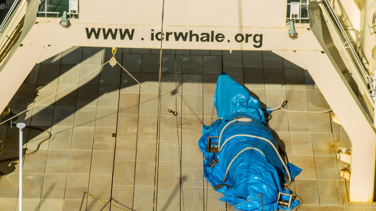 A whale is covered in a blue tarp so as not to be filmed. Picture: Sea Shepherd