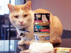 Pet food recall: are your animals at risk?