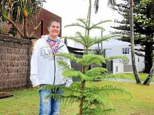 Neighbourhood battle over lone pine