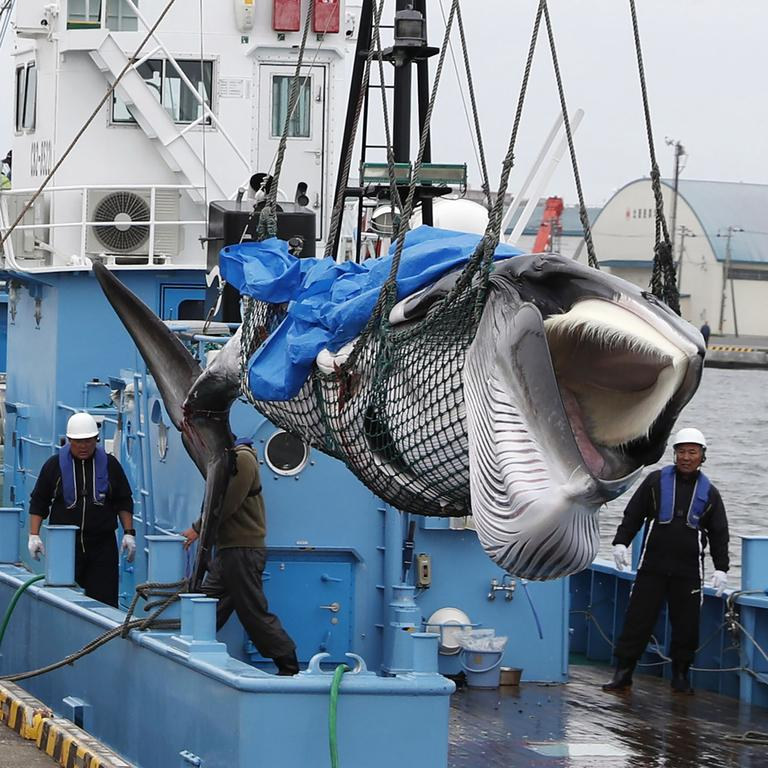 Australian officials have condemned Japan's resumption of commercial whaling. Picture: Masanori Takei