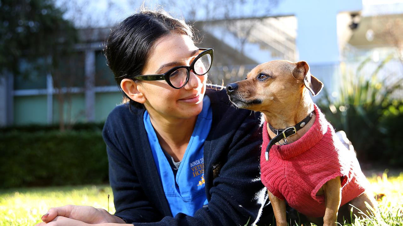 Bondi Junction veterinarian Babs Hernandez with her dog Indiana. Picture: Toby Zerna