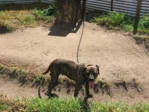 GRAPHIC: Dog fighting ring cruelty puts man in jail