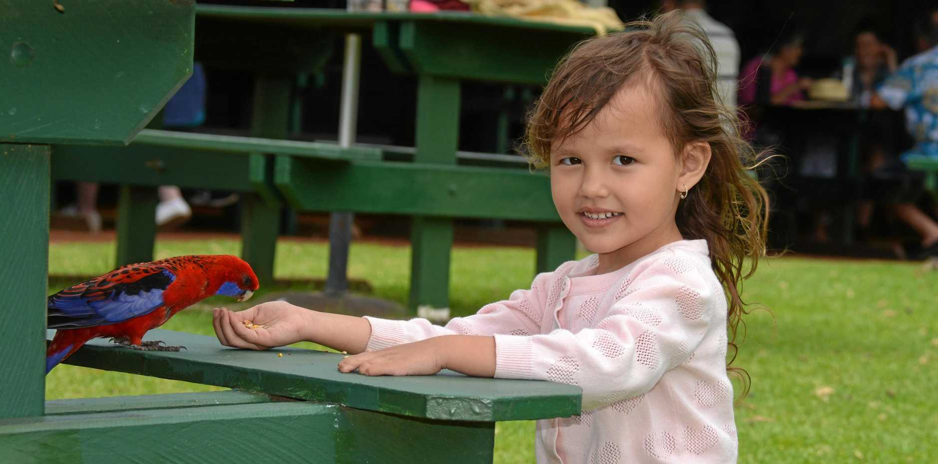 UP CLOSE: Aviya Cutts feeds the birds at the Bunya Mountains.
