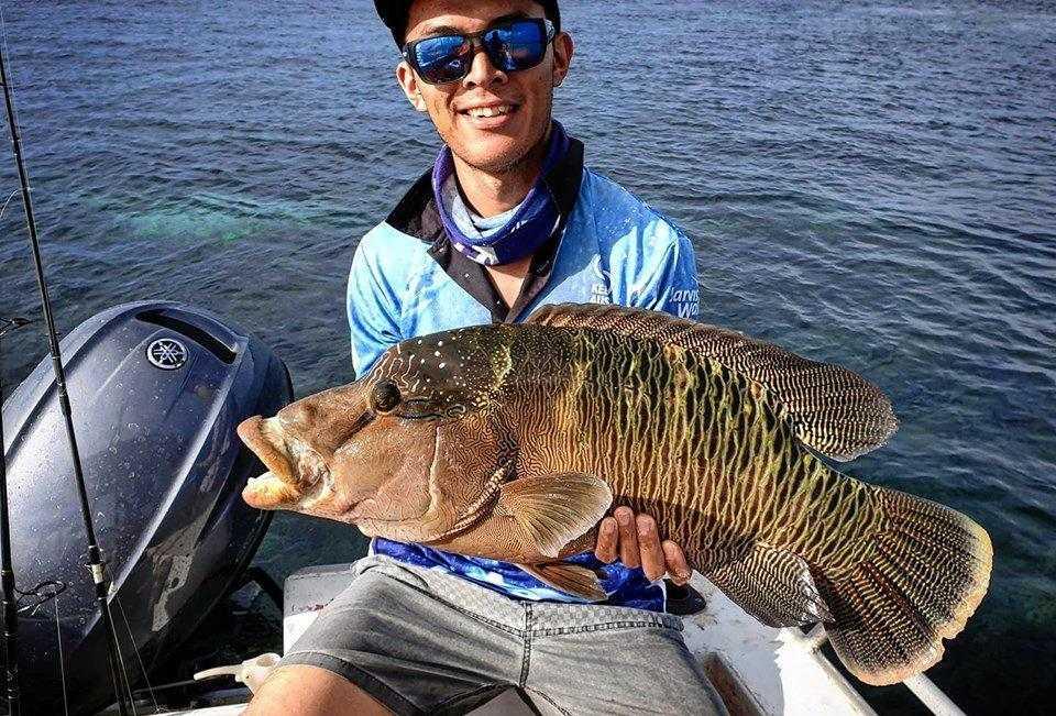 Luke Matikainen caught this Maori wrasse in the shallows off Mackay.