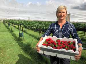 Bay berries thrive as harsh weather holds off