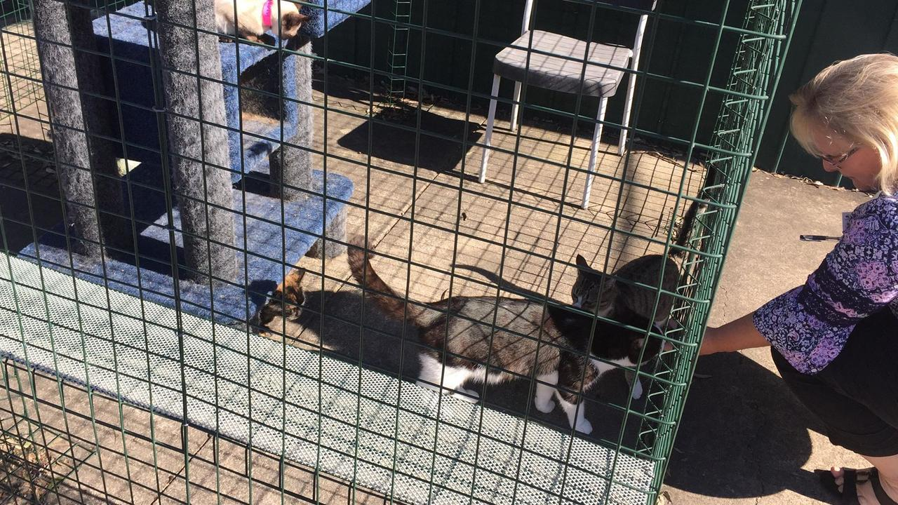 Cat enclosures at Logan City Council's Kingston pound.