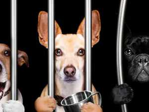 Impounded pets 'held to ransom'
