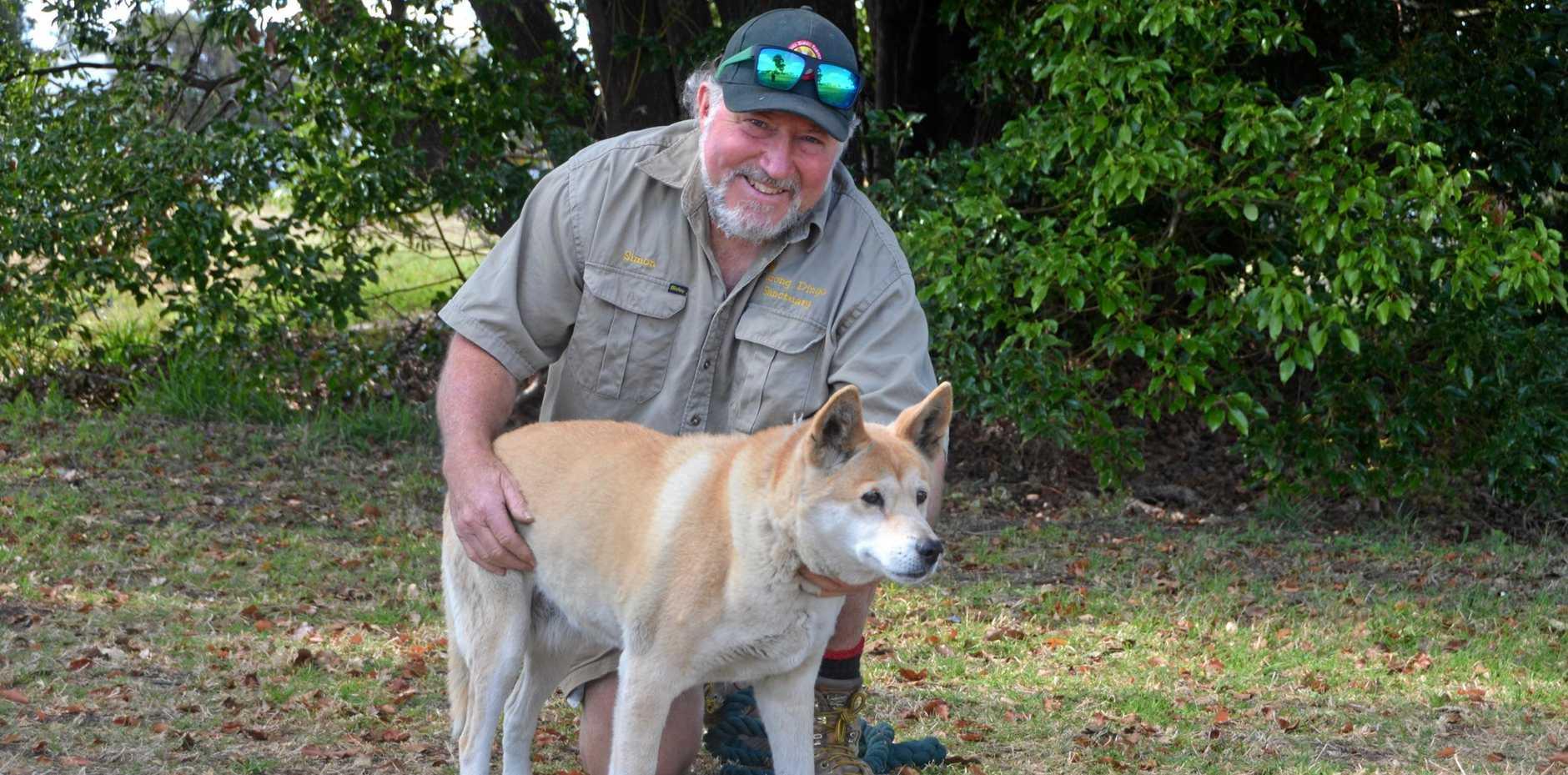 Wildlife advocate Simon Stretton with his dingo, Honey.