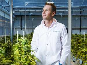 Inside Queensland's medicinal cannabis farm