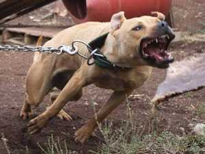 The force waging war on dog fighting scourge