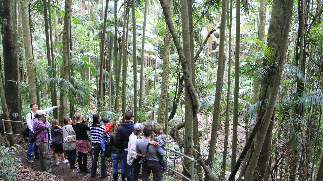 Scenic Day Tour Group operates tours on the Gold Coast including to Springbrook National Park.